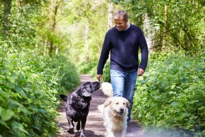 Photo - Man walking with dogs